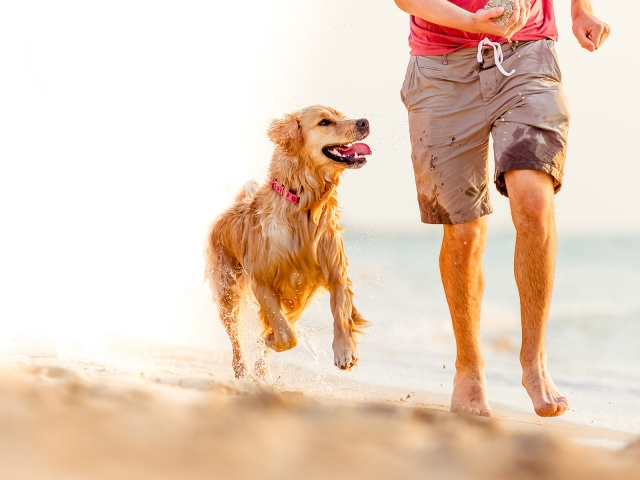 A dog is playfully running next to a man