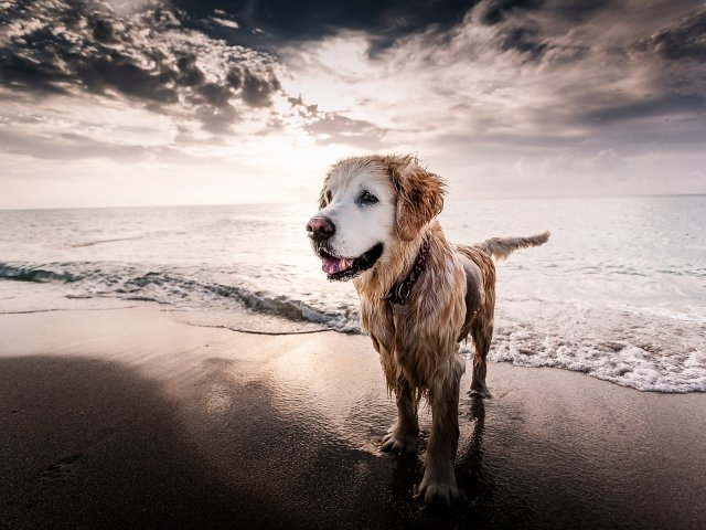 A dog standing on the beach