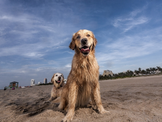 Two dogs posing at the beach against the blue sky