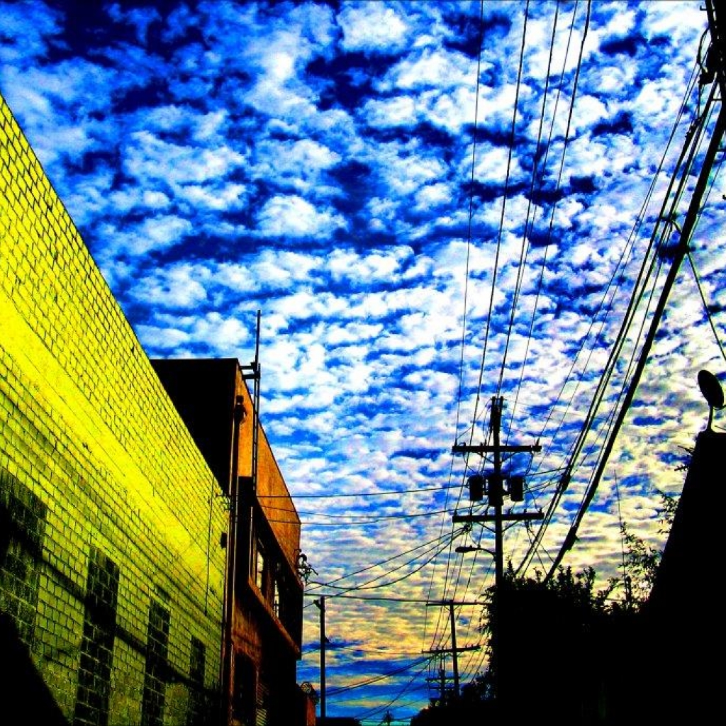 Robert Zuckerman Vivid Alley