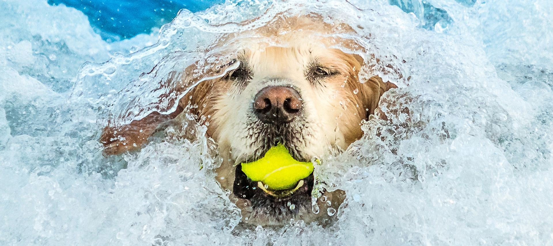 a dog swimming against the waves with a tennis ball in its mouth